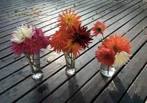 Autumn Dahlias by Karen Kincy